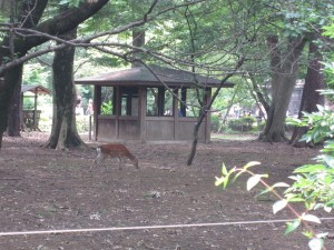 I井の頭自然文化園