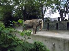 都民の日(10/1)は井の頭自然文化園の入園が無料になります!