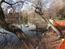 歩きながら知る「水」のこと-神田川と水のない井の頭池-