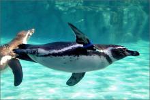 井の頭自然文化園にペンギン舎がオープンします!!