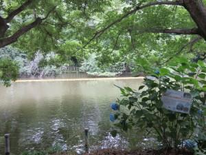 井の頭池2