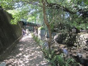 井の頭線ガード下の神田川1