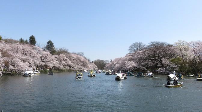 満開の桜・春爛漫