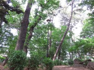野鳥の森1