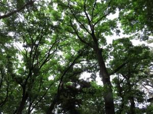 野鳥の森公園2