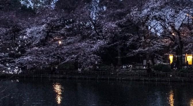 昼間とは雰囲気の違う「夜桜」を観賞