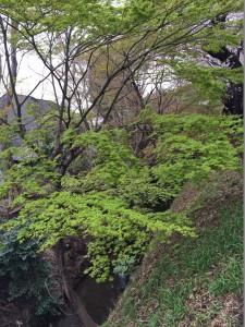玉川上水(桜橋付近)