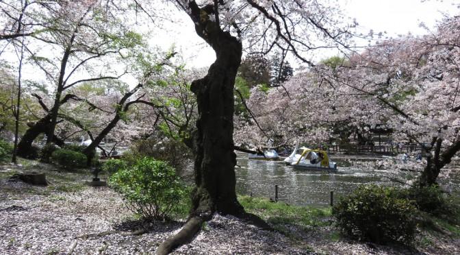 吹く風に花びらが舞い…桜は散りゆく姿もまた美しい