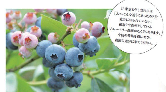 今すぐ行ける!ブルーベリー摘み@武蔵野市 ~完熟ブルーベリーは驚くほどみずみずしくて美味!~