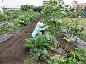 IMG_1552_野菜塾