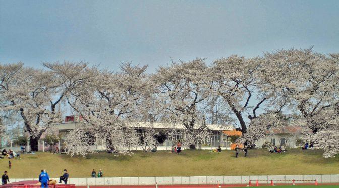 【今週末から無料開放🌸】武蔵野陸上競技場芝生スタンドでお花見🍡