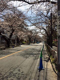 中央通り「桜のトンネル」の、2017/4/2の様子。