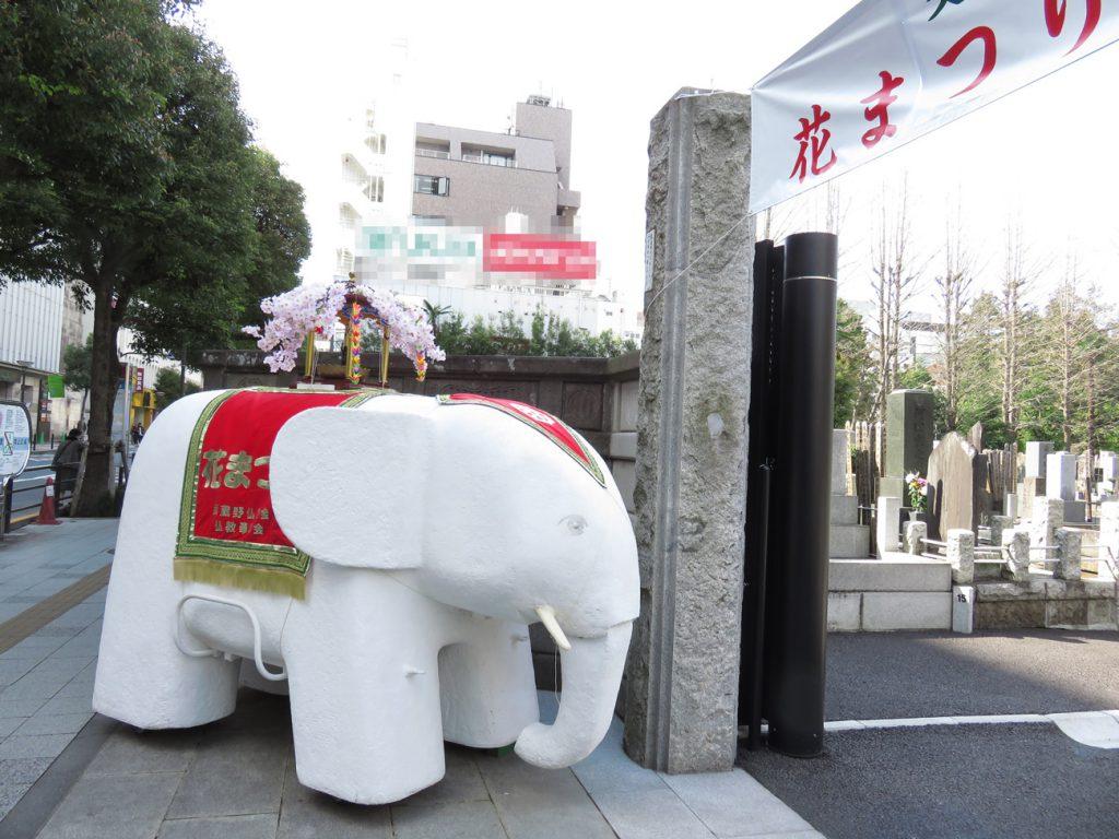 意外と可愛らしい白象さん。月窓寺門前で、道行く人々の人気者になっていました!