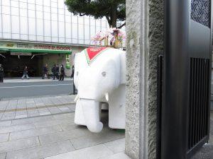 最後に、門の外からチラリと覗く白象さん
