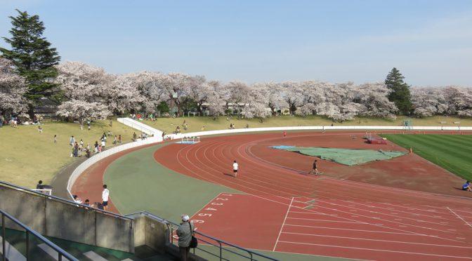 【来週末から無料開放🌸】武蔵野陸上競技場芝生スタンドでお花見🍡