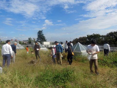 武蔵野クリーンセンター屋上ガーデン収穫体験&観察会