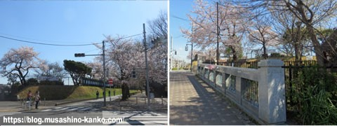 玉川上水散策(浄水場、桜橋)