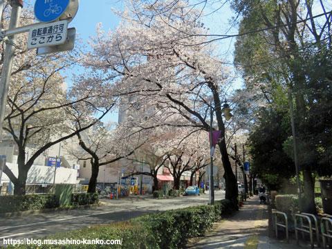 玉川上水散策(桜通り 三鷹駅北口前)