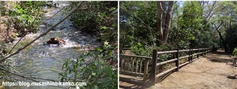 玉川上水散策(ほたる橋)